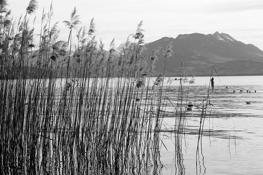 lac, annecy, haute savoie, 74, eau, roseaux, montagne, reflets, ondulations, noir et blanc, photo, photos, photographie, photographies